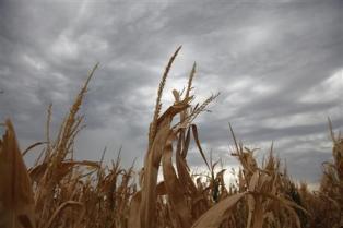 Пострадавшим от засухи фермерам США выплатят страховые компенсации и дотации от государства