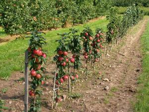 Испания: ущерб фруктовой промышленности оценен в 170 миллионов евро
